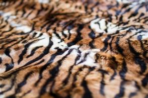 Кролик Тигр
